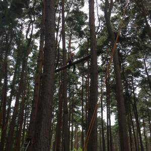 climbing avon 674